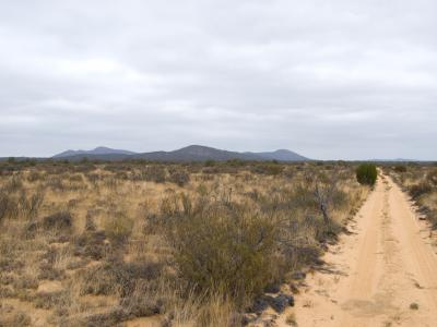 Profile of Helena and Aurora Range (Bungalbin) seen from the north track through the sandplain.  Photo by Laura Corbett