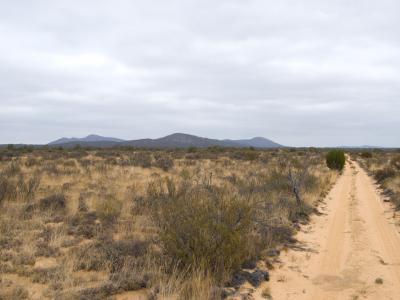 Profile of Helena and Aurora Range (Bungalbin) seen from the north track through the sandplain.  Photo by Laura Corbett