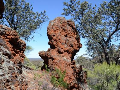 BIF outcropping and Dryandra arborea trees (also known as Banksia arborea).  Photo by Amanda Keesing