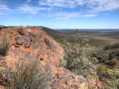 View from top of the Range with Tetratheca aphylla subsp. aphylla and Dryandra arborea (Banksia arborea).  Photo by Rob Neave
