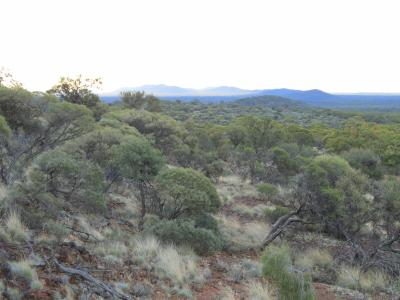 View of Mt Jackson Range from J4 iron ore deposit in 2012 (prior to mining).