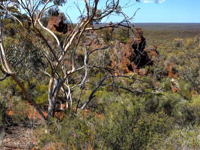Mallee and BIF outcropping.  Photo by Rob Neave